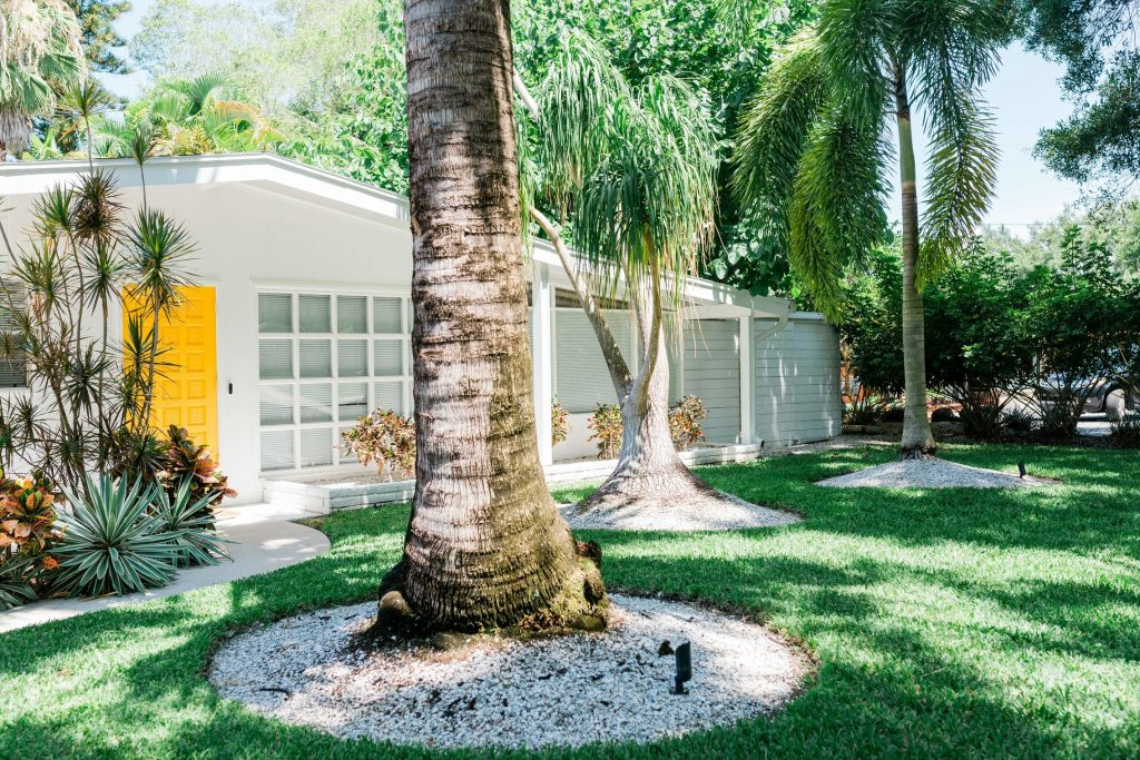 Large Palm Tree in front of house
